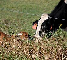 Grass Fed Cattle by AshlyFoster