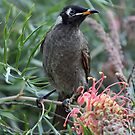 Bridled Honeyeater by triciaoshea
