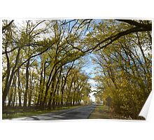 The autum road leading to where ever Poster