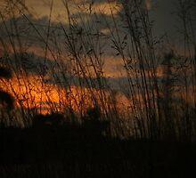 sunset at Kampong Johan Setia Malaysia by MohdFaris