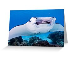 Open Wide ~ Manta being cleaned Greeting Card