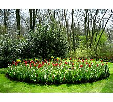 Reds in the Bed - Tulips in the Keukenhof Gardens Photographic Print
