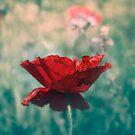 Poppy field by Lynn Starner