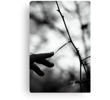 Once Upon A Dream. Canvas Print