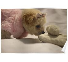 Toy Poodle Puppy - Finds Slipper Poster