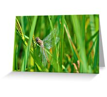 Gossamer Greeting Card