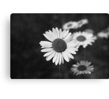 Daisy in Black and White Canvas Print