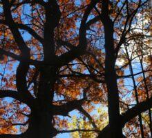 Backlit Fall Tree 2 Sticker