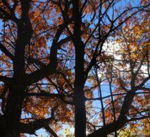 Backlit Fall Tree Sticker