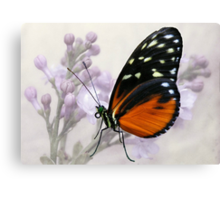 Try a little tenderness... Canvas Print