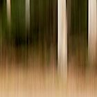 Eucalypts - Hollybank Forest, Tasmania by Liam Byrne