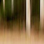 Eucalypts - Hollybank Forest, Tasmania by Liam Byrne