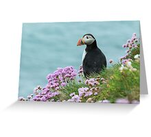 Puffin in pinks, Saltee Island, County Wexford, Ireland Greeting Card