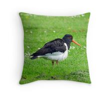 Little Oyster catcher! Throw Pillow