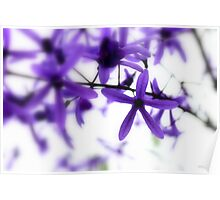 Purple flowers on white Poster
