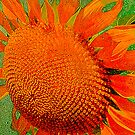 Orange Sunflower by Kathleen Stephens