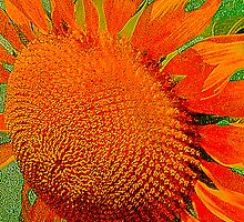 Orange Sunflower by Kathleen Stephens