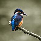 kingfisher 2 by brett watson