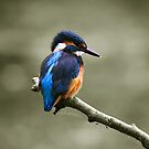 kingfisher 2 by Brett Watson Stand By Me  Ethiopia