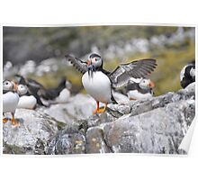 Puffin II Poster