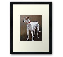 Greyhound white with brindle Framed Print
