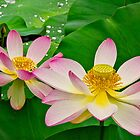 Two Lotus Blossoms by Lightengr