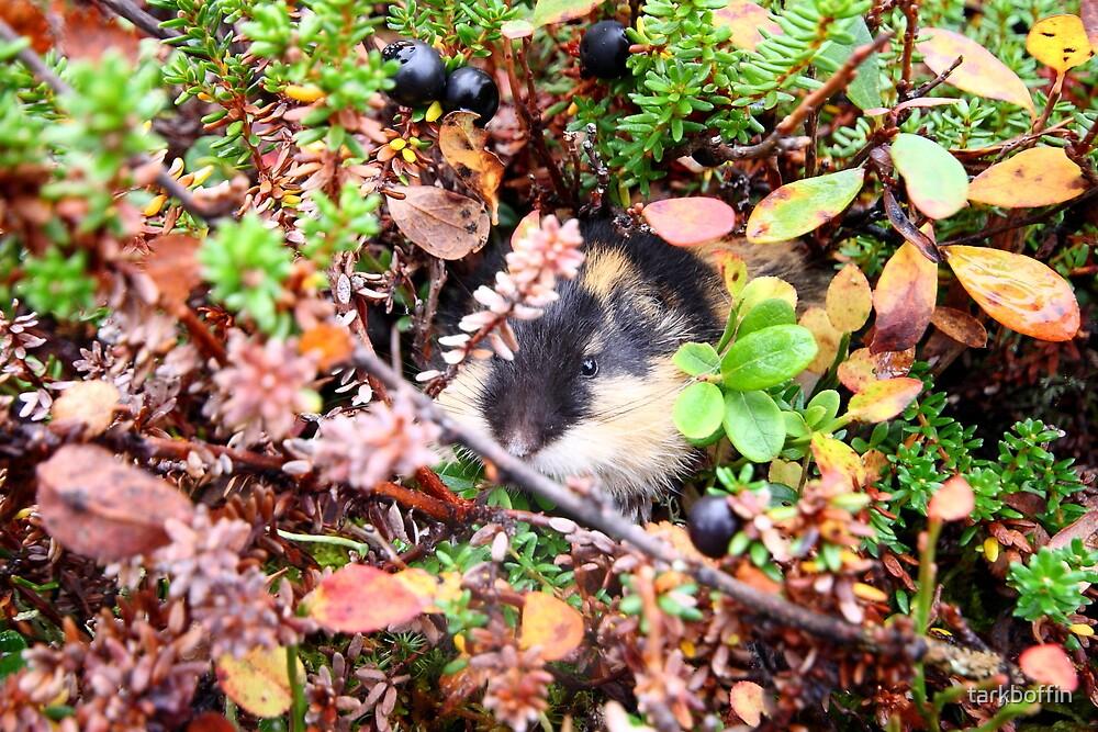 Lemming by tarkboffin