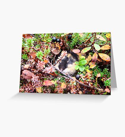 Lemming Greeting Card