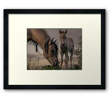 Youngster Framed Print