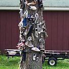 Shoe Tree by cherylc1