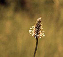 Wild Flower by peter Jensen