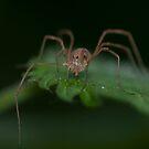 Spider by Matt Sillence
