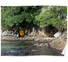 Natures boathouse, Bay of Islands........! Poster