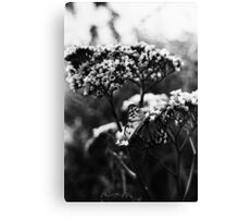 Butterfly Film. Canvas Print