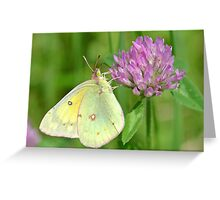 The Beauty All Around Us Greeting Card