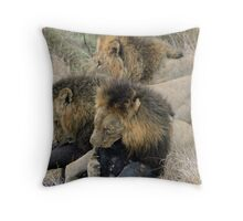 A real life live lion kill! Throw Pillow