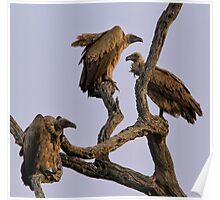 Vulture Trio Poster