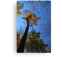 Looking up to Fall 10 Canvas Print