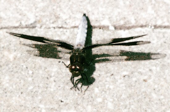 Hello Mr. Dragonfly by Konoko479
