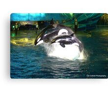 Orca Whales Canvas Print