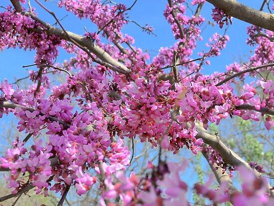 Spring Blossoms by Konoko479