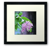 Ephemeral Beauty Framed Print