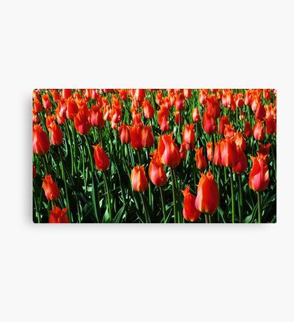 Tulips 11 Canvas Print
