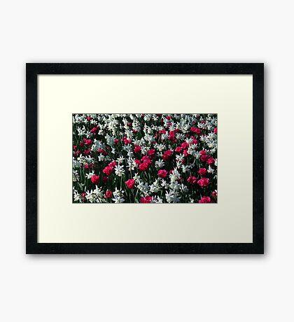 Tulips 16 Framed Print