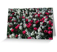 Tulips 16 Greeting Card