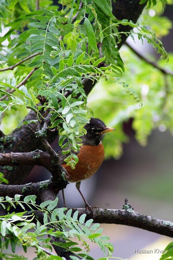 Robin by Hassan Khan