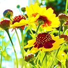 PRETTY CLUSTER FLOWERS by Monte Roberts