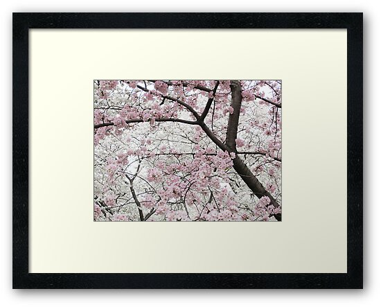 Cherry Blossoms 10 by photonista
