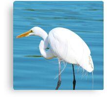 "Majestic Crane ""George"" Canvas Print"