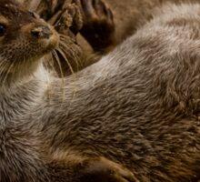 Eurasian Otter (Lutra lutra) Sticker